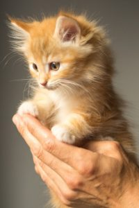animal-cute-kitten-cat-large