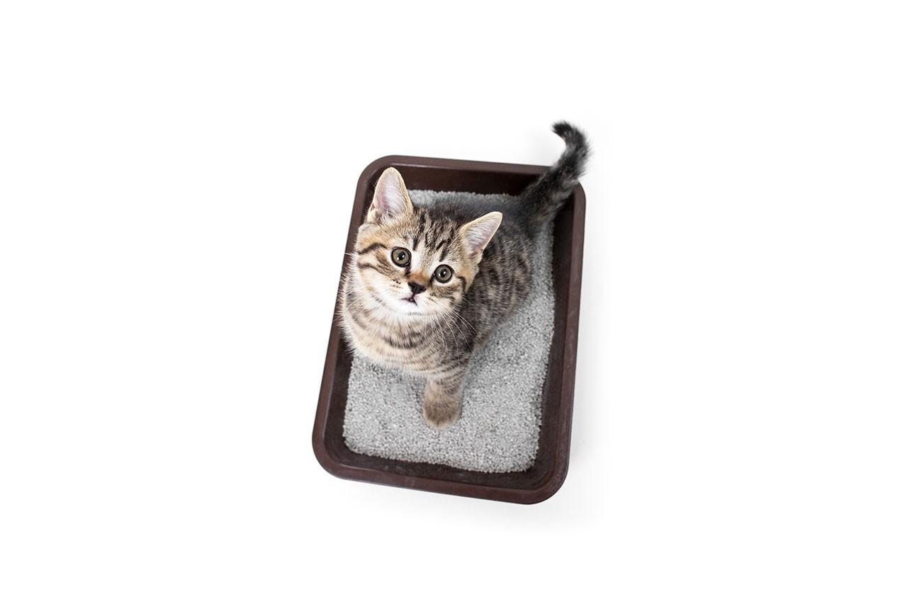 PikaŠOP dodatki pesek za mačje stranišče